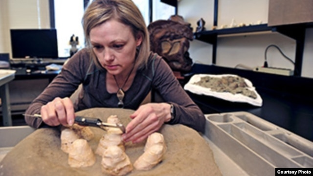 Darla Zelenitsky, assistant professor in the Department of Geoscience at the University of Calgary, explored the unusual nesting habits of the small meat-eating Troodon dinosaur by studying the shells of fossil eggs.(Photo:Jay Im)