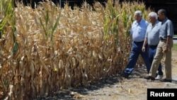 U.S. President Barack Obama (R) walks around the McIntosh family farm with the owners to view drought-ridden corn fields in Missouri Valley, Iowa, Aug. 13, 2012.