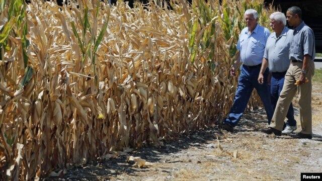 U.S. President Barack Obama (R) walks around the McIntosh family farm with the owners to view drought-ridden corn fields in Missouri Valley, Iowa, August 13, 2012.