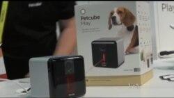 Винахід українців дозволяє власникам домашніх тварин гратися з ними на відстані за допомогою мобільного додатку. Відео