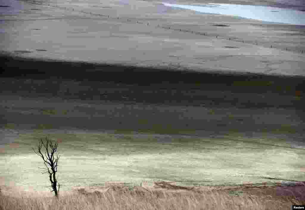 A dead tree stands in front of shallow water and a dried-up area of Lake George, located 50 km (31 miles) north of the Australian capital city of Canberra.