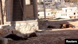 Animal carcasses are shown in wake of what residents describe as a chemical weapons attack in Khan al-Assal area, near Aleppo, Syria, March 23, 2013.