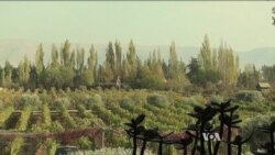 Lebanese Winemakers Thrive Despite War Next Door