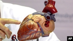FILE - model of a human heart.