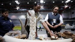 Cracking Down on Illegal Wildlife Products