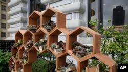 """Un nuevo """"hotel polinizador para abejas"""" en el jardín de la terraza del Hotel Fairmont, en San Francisco."""