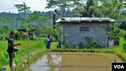 Petani ikan anggota kelompok tani 'Sembada Mina Mandiri' sedang membersihkan panel-panel surya dan memberi makan ikan (foto: Nurhadi Sucahyo).