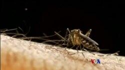 ဖေလာ္ရီဒါျပည္နယ္ Zika ဗုိင္းယစ္ပိုး ကူးစက္မႈ
