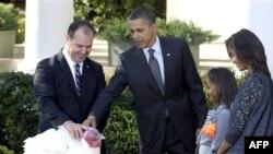 Tổng thống Obama ân xá cho con gà tây 'Apple'