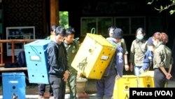 Petugas mengangkut tujuh Lutung Jawa menuju hutan RPH Sumbermanjing Kulon, Malang selatan (Foto: VOA/Petrus)