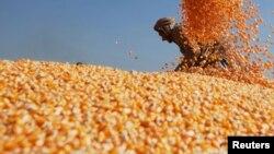 Les subventions à la production de mais pour servir de biocarburant sont jugées particulièrement préjudiciables à la sécurité alimentaire par les ONGs