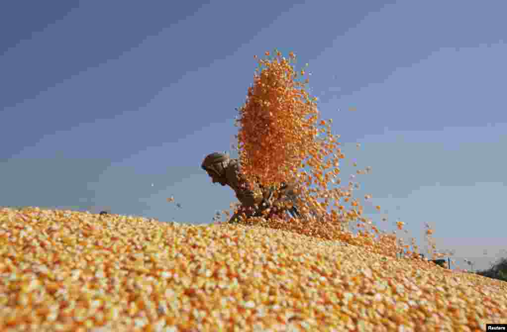 A worker spreads out corn to dry after harvesting them from the cobs, before selling them at a market in Lahore, Pakistan.