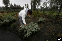 "Ichiro Kitazawa, a chef at the Japanese restaurant Rocoi, inspects herbs on a floating garden known as a ""chinampa"" in Xochimilco in Mexico City, July 13, 2017."