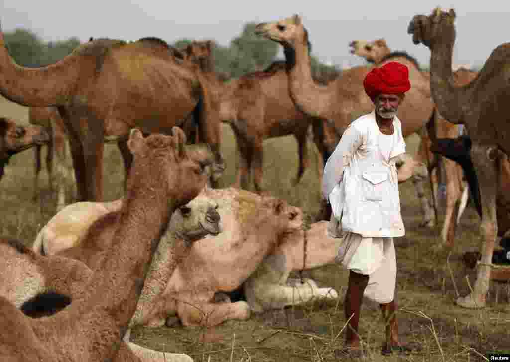 بھارت کی ریاست راجستھان کا قصبہ پُشکر نومبر میں ناصرف مقامی افراد بلکہ غیر ملکی سیاحوں کی بھی توجہ کا مرکز بن جاتا ہے۔