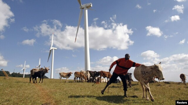 A Masaai herdsman looks after his cattle near the power-generating wind turbines at the Kenya Electricity Generating Company station in Ngong hills, southwest of the capital Nairobi, July 17, 2009.