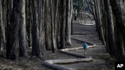 Tim Green, of Sidney, Australia., jogs on top of the sculpture Wood Line by artist Andy Goldsworthy along an eucalyptus grove in The Presidio on Tuesday, Jan. 7, 2014, in San Francisco. (AP Photo/Marcio Jose Sanchez)