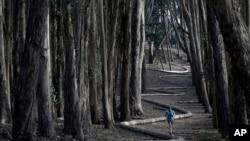 """Tim Green, dari Sidney, Australia, berlari di sekitar """"Wood Line"""" karya seniman Andy Goldsworthy di sepanjang hutan kayu putih di The Presidio, San Francisco, 7 Januari 2014. (Foto AP / Marcio Jose Sanchez)"""