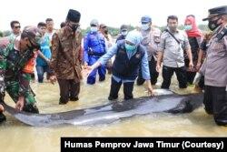 Gubernur Jawa Timur, Khofifah Indar Parawansa, turut memantau proses penyelamatan paus pilot yang terdampar di perairan Bangkalan. (Foto: Courtesy/Humas Pemprov Jawa Timur).
