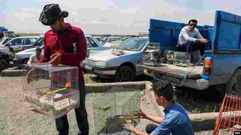 بازار پرنده فروشان در انتهای بلوار میامی مشهد در این بازار هفتگی قیمت کبوتران از ده هزارتومان تا دو میلیون تومان در نوسان است. عکس: محسن اسماعیلزاده