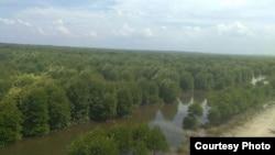 Kawasan hutan bakau atau mangrove di Desa Lubuk Kertang, Kecamatan Brandan Barat, Kabupaten Langkat, Sumatera Utara. (Courtesy: KLHK)