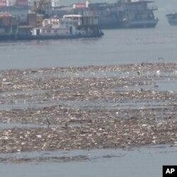 长江里的漂浮物