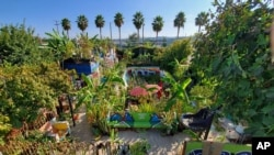 This photo provided by Lucky Atkare shows an urban garden in Los Angeles. Interest in gardening has grown around the country. And urban gardeners say it's particularly important for the health and resiliency of city neighborhoods. (Lucky Atkare via AP)