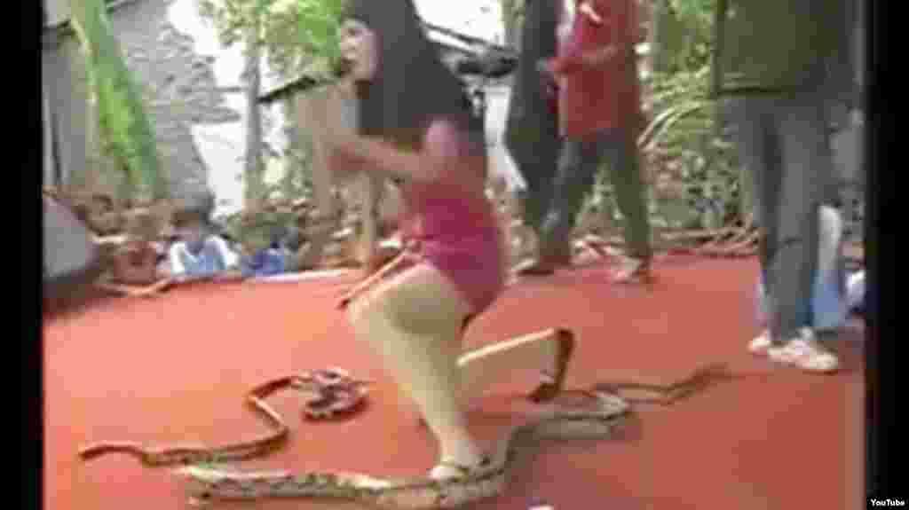 ایرما بولی، یک خواننده جوان اندونزیایی در هنگام اجرا توسط مار کبرا گزیده شد و جانش را از دست داد. خانم بولی، یک خواننده نه چندان مشهور و ۲۶ ساله بود که در سبک دانگدوت فعالیت میکرد. این نوع موسیقی با رقص و نواختن ساز ضربی همراه است و خواننده در هنگام خواندن میرقصد. بسیاری از دختران جوان در ابتدای راه خوانندگی به این سبک رو میآورند و استفاده از مار در نمایشهای آنان رایج است. رسانههای محلی نوشتهاند که دستمزد یک اجرای دانگدوت ۲۰ دلار است که اجرا با نمایش مار همراه شود به ۲۵ دلار افزایش پیدا میکند. در نتیجه اجرا با مار چندان عجیب و دور از ذهن نیست. ضمن این که حضور مار بر روی صحنه احتمال دادن انعام به خواننده را بیشتر میکرد.