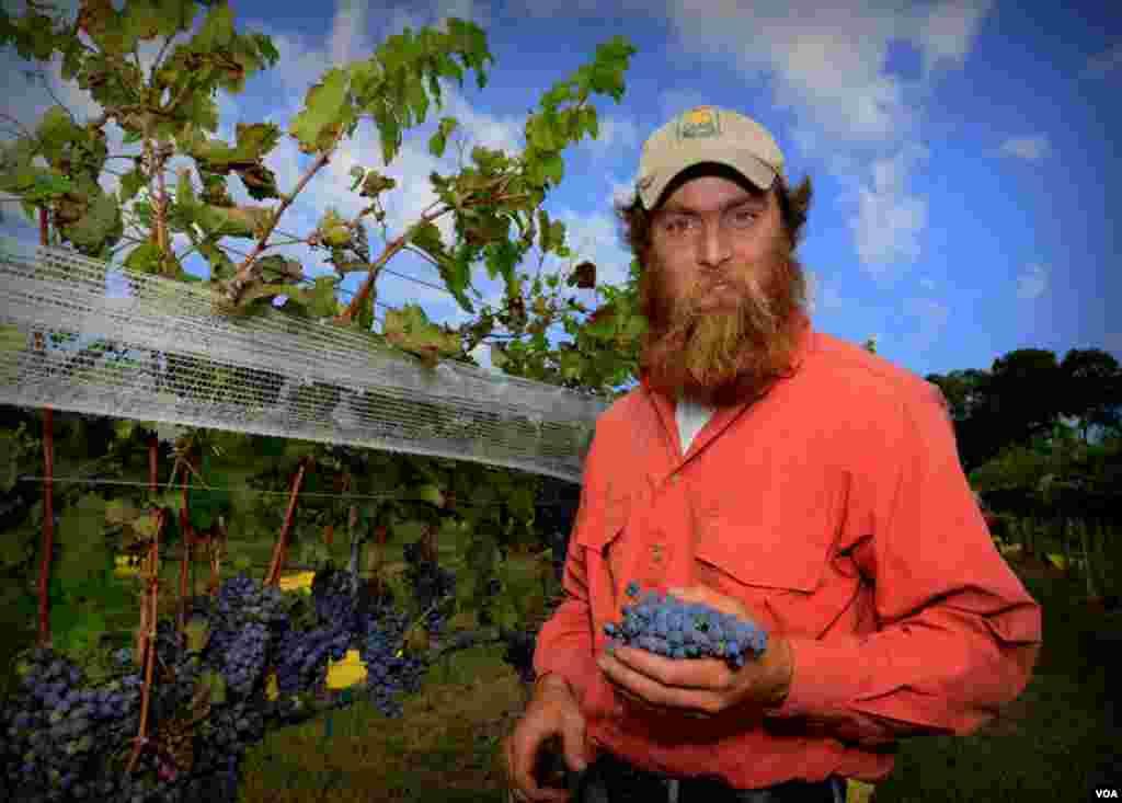 Абрахам Клагстон – помощник Медведева на сборе урожая