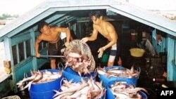 Cá tra là mặt hàng xuất khẩu đứng thứ nhì về giá trị xuất khẩu của Việt Nam