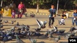 ایک بچہ بڑے شوق سے کبوتروں کو دانا ڈال رہا ہے