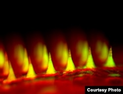 An up-close fluorescent image of the microneedle patch with insulin tagged in green. (Credit: Zhen Gu, Ph.D.)