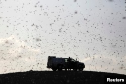 FILE - Locusts fly near a car belonging to experts as they map the swarms of locusts near Kmehin in Israel's Negev desert, March 5, 2013.