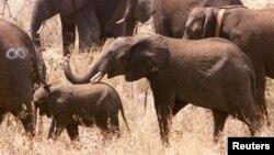 Việc giết voi lấy ngà để đáp ứng nhu cầu mua ngà voi ở Trung Quốc đã dẫn tới sự sụt giảm của số voi ở Mozambique.