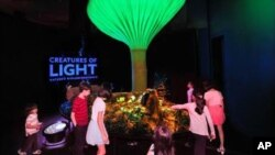 The 'Creatures of Light' exhibit explores the mysterious world of life that glows