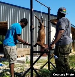 Dua pelanggan dari Ghana menyembelih dan memotong hewan kurban sesuai tradisi mereka (foto: courtesy).