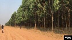 poligono florestal antes do incendio
