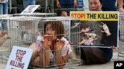 A South Korean animal rights activist confines herself in a cage during a campaign opposing South Korea's culture of eating dog meat in Seoul, South Korea, Aug. 11, 2017. In Indonesia, animal welfare groups are calling for the closing of markets where dogs, and other animals, are slaughtered for food.