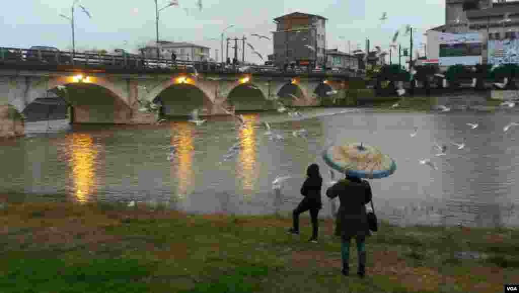 پل چشمه کیله شهسوار و غذا دادن به پرنده ها در زیر باران عکس: بهزاد یوسفی (ارسالی شما)