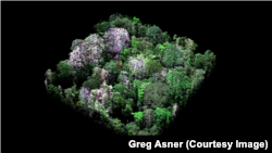 Three-dimensional image using laser-guided imaging spectroscopy taken by CAO shows natural color of trees in one hectare of rainforest
