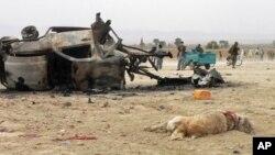 حمله بمگذاری در مسابقه سگ جنگی