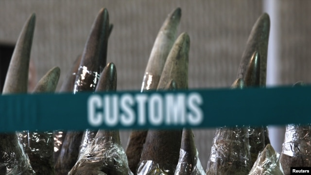 Similar to a recent seizure by Philippines officials, part of a shipment of 33 rhino horns seized by Chinese customs agents displayed at news conference, Hong Kong, Nov. 15, 2011.