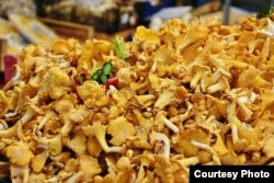 Chanterelle mushrooms are popular in many types of dishes.