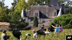 FILE - Workers collect red grapes in the vineyards of the famed Chateau Haut Brion during the grape harvest in Pessac-Leognan, near Bordeaux, southwestern France, Oct. 7 , 2013. Floods, drought, frost and hail cut into world wine production this year from Europe to South America.