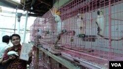Pemilik penangkaran burung langka di Solo memegang sertifikat resmi di tengah kandang-kandang berisi kakatua. (VOA/Yudha Satriawan)