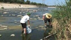 Волонтеры возвращают к жизни реку Лос-Анджелес