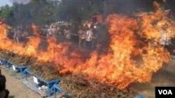 Pemusnahan ribuan kilogram ganja oleh Polda Jabar (Foto: dok.)
