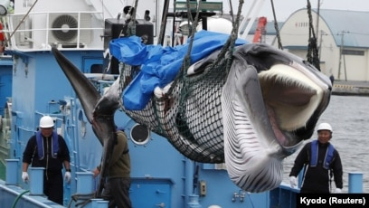 Image result for japan whaling