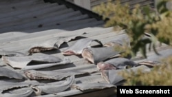 Số vây cá mập được báo Chile chụp. (Ảnh: El Mostrador)