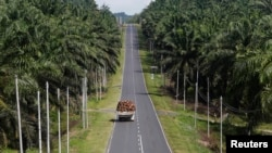 A truck carrying oil palm fruits passes through Felda Sahabat plantation in Lahad Datu in Malaysia's state of Sabah on Borneo island, February 20, 2013.