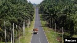 말레이시아 보루네오섬. (자료사진)